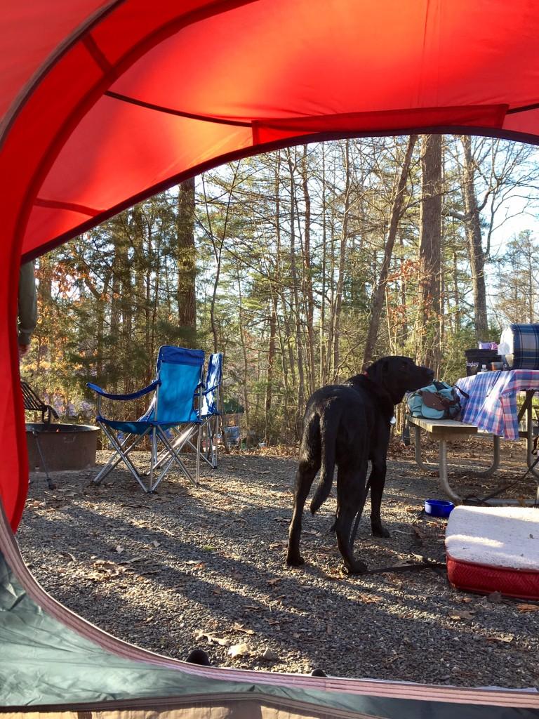 Bing tent
